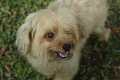 Desenfocado de un perro adorable borroso Imágenes de archivo libres de regalías