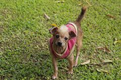 Desenfocado de un perro adorable borroso Foto de archivo