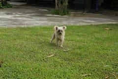 Desenfocado de un perro adorable borroso Fotografía de archivo libre de regalías