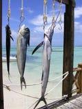 Desengate de pesca Foto de Stock
