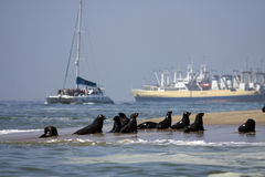 Desengate do barco em torno do louro de Walvis Imagem de Stock