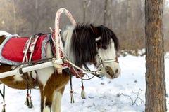 Desenhado por um cavalo imagens de stock
