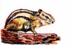 desenhe a ilustração, esquilo que senta-se na árvore Ilustração Royalty Free