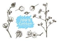 Desenho ajustado da mão do vetor do algodão Imagem de Stock