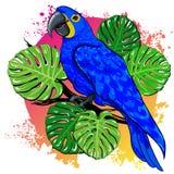 Desenho bonito do verão do vetor com papagaio, folhas de palmeira ilustração do vetor