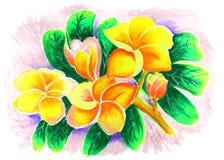 Desenho cor-de-rosa do deserto fotos de stock