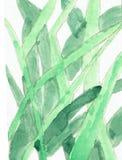 Desenho da aquarela das gramas Imagens de Stock Royalty Free