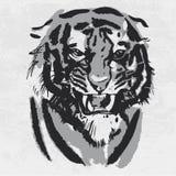 Desenho da aquarela do tigre de vista irritado Retrato animal no fundo branco ilustração stock