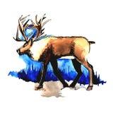 Desenho da aquarela dos cervos ilustração royalty free
