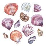 Desenho da aquarela dos escudos do mar ilustração stock