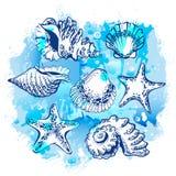 Desenho da aquarela pela mão de conchas do mar e de estrelas do mar diferentes Imagem de Stock Royalty Free