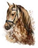Desenho da cabeça de cavalo Fotografia de Stock