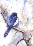 Desenho da cor de água de um pássaro ilustração stock