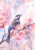 Desenho da cor de água de um pássaro em um ramo ilustração do vetor