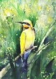 Desenho da cor de água de um pássaro tropical ilustração do vetor