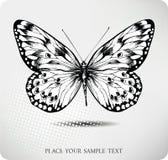 Desenho da mão da borboleta. Vetor Foto de Stock