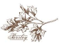 Desenho da mão da salsa Fotos de Stock Royalty Free