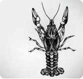 Desenho da mão das lagostas. Ilustração do vetor. ilustração stock