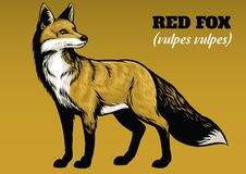 Desenho da mão da raposa Fotografia de Stock