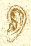 Desenho da orelha Imagens de Stock