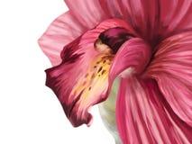 Desenho da orquídea ilustração royalty free