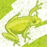 Desenho da rã Imagens de Stock