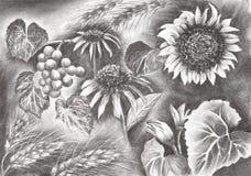 Desenho das flores do verão, da ilustração da quadriculação, do carvão vegetal e de lápis ilustração do vetor