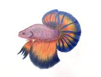 Desenho de combate dos peixes no bloco de desenho no fundo do Livro Branco Foto de Stock Royalty Free
