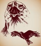 Desenho de dois Eagles Fotografia de Stock Royalty Free