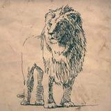 Desenho de esboço do leão no papel amarrotado da textura Imagens de Stock Royalty Free