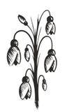 Desenho de flores da mola Foto de Stock Royalty Free