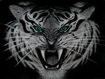 Desenho de lápis do close up de um tigre branco ameaçando com olhos de água-marinha, animal perigoso isolado no fundo preto ilustração royalty free