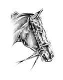 Desenho de lápis a mão livre da cabeça de cavalo Fotos de Stock