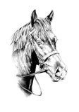Desenho de lápis a mão livre da cabeça de cavalo Fotografia de Stock Royalty Free