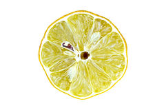 Desenho de um limão Foto de Stock
