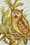 Desenho de uma coruja fotografia de stock royalty free