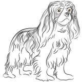 Desenho descuidado do Spaniel de rei Charles Fotografia de Stock Royalty Free