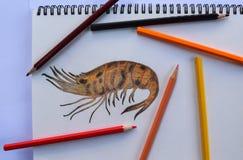 Desenho do camarão no livro de desenho e nos lápis coloridos Imagens de Stock