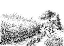 Desenho do campo de cereais Fotografia de Stock
