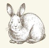 Desenho do coelho do ano novo Imagens de Stock Royalty Free