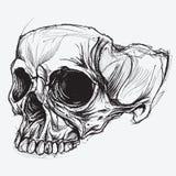 Desenho do crânio ilustração do vetor