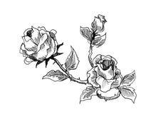 Desenho do estilo do vintage das rosas Foto de Stock Royalty Free
