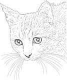 Desenho do gato   Imagem de Stock