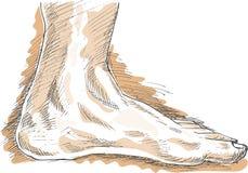 Desenho do pé humano esquerdo Fotografia de Stock Royalty Free