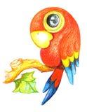 Desenho do papagaio ilustração do vetor