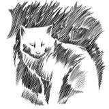 Desenho do vetor do gato. Fotografia de Stock