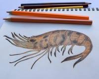 Desenho grelhado do camarão no livro de desenho e nos lápis coloridos Fotografia de Stock