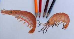 Desenho grelhado do camarão no livro de desenho e nos lápis coloridos Os trabalhos de casa do estudante na cor escrevem a sala de Imagens de Stock