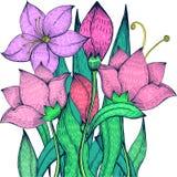 Desenho a mão livre de florescência do lírio, close up ilustração royalty free