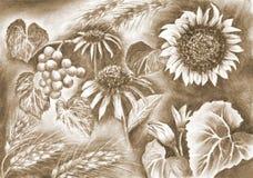 Desenho rural das flores do verão, da ilustração da quadriculação, do carvão vegetal e de lápis ilustração royalty free